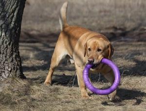 Игрушка для тренировки собак