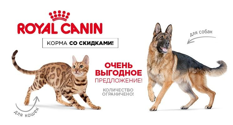 -10% на сухой Royal Canin!